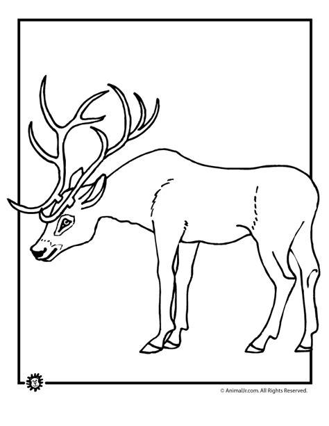 red deer coloring pages   print