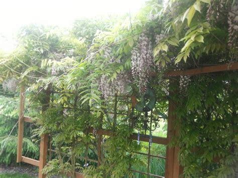 wisteria trellis design 9 best wisteria trellis images on pinterest wisteria trellis backyard ideas and garden trellis