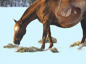 Adjusting Rations For Mares In Late Pregnancy