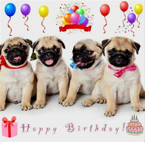 Happy Welpen Happy Birthday Geburtstag Mops Welpen Und Mops Hund
