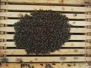 Wie überwintern Bienen : sr gr nhaus dachbegr nung naturland gartenbau ~ A.2002-acura-tl-radio.info Haus und Dekorationen