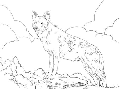 ausmalbild nordamerikanischer rotwolf ausmalbilder