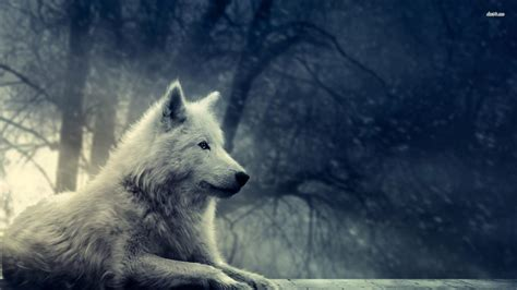 Cool Animal Wallpaper Light Wolf - the gallery for gt grey wolf wallpaper desktop