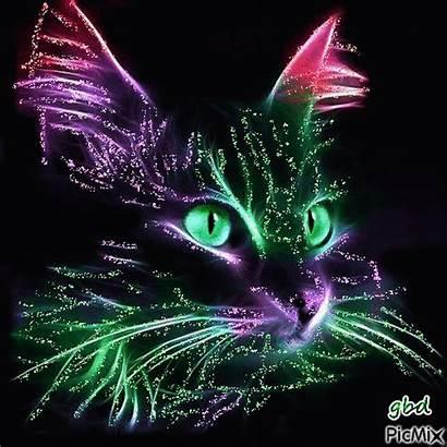 Cats Gifs Cat Animal Kitty Neon Animals