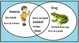 1000  Images About Frog Unit On Pinterest