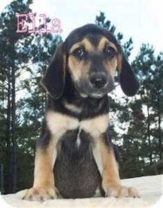 ELLA | Adopted Puppy | Walker, LA | Beagle/Black and Tan ...