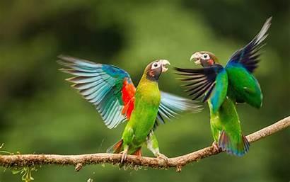 Birds Parrots Wallpapers Tags Desktop Wallpapertag Animals