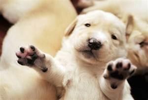 Newborn Puppies | Cuteness Overflow