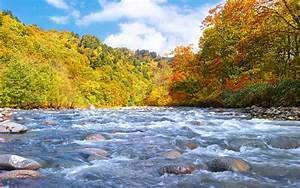 Forest, River, Fall, Flow, Early, Stones, Wallpapers, Hd, Desktop, And, Mobile, Backgrounds