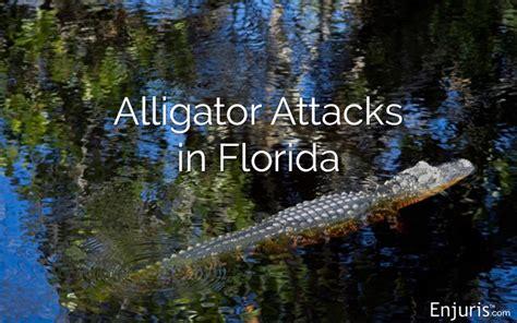 florida alligators attacks  safe  humans  pets