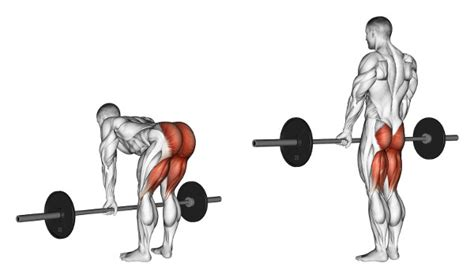 Olympic Weight Sets With Bench by Who Created The Romanian Deadlift Physical Culture Study