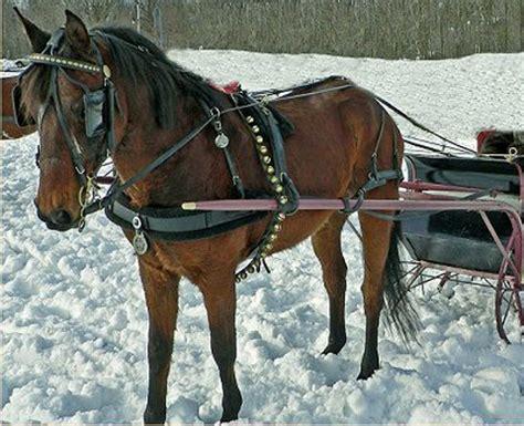 sleigh harness 791 sleigh bells 1k smiles