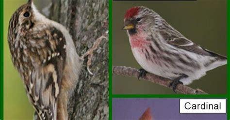 michigan wild bird species wild birds unlimited earth