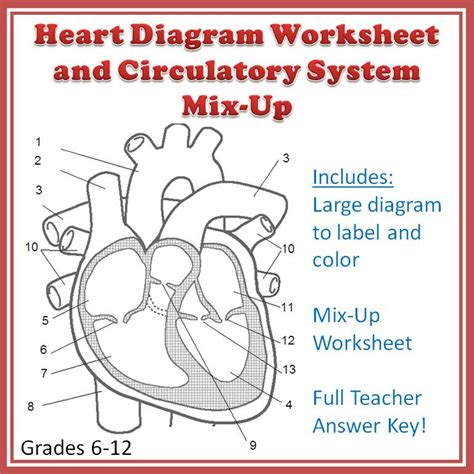 A Clear, Readytoprint Heart Diagram Worksheet That Includes The Valves As Well As The Chambers