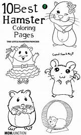 Hamster Coloring Pages Hamsters Pets Printable Adult Pet Toddler Preschool Clipart Colouring Cage Sheets Number Hampster Pat Princess Head Craft sketch template