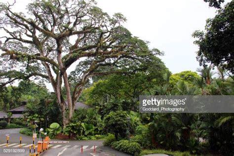 Botanischer Garten Singapur Bilder by Botanischer Garten Singapur Stock Fotos Und Bilder