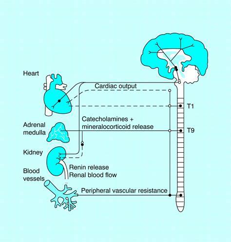 pathophysiology  hypertension  bmj