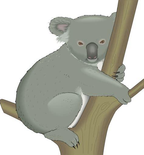 Clipart Koala by Koala In Tree Clip At Clker Vector Clip