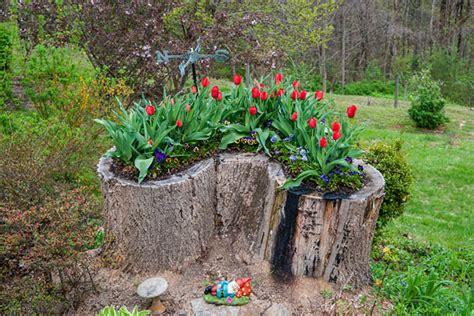 tree stump planter 18 tree stumps turned into beautiful flower planters
