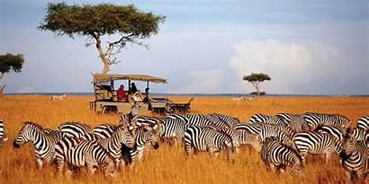 Safari African Landscape Wallpapers Amazing Wallpapersafari Code