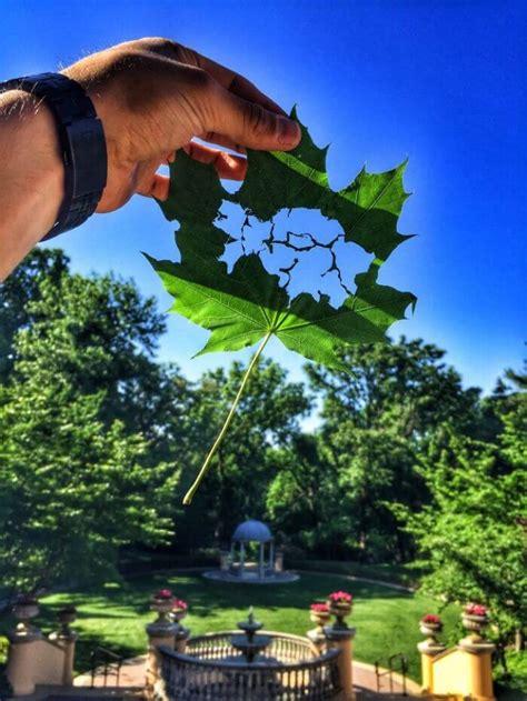 artista crea dibujos en hojas de arboles  solo una navaja