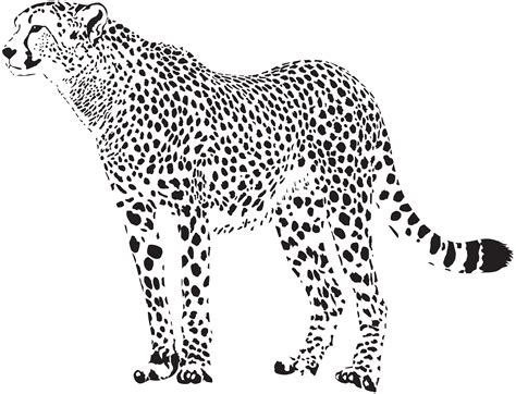 cheetah silhouette png transparent clip art image gallery