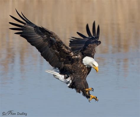 defense  scavengers feathered photography