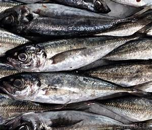 What is a Sardine? (with pictures)