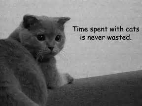 quotes about cats cat quotes quotesgram