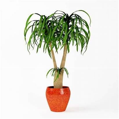 Potted Indoor Plant 3d Cgtrader Evermotion