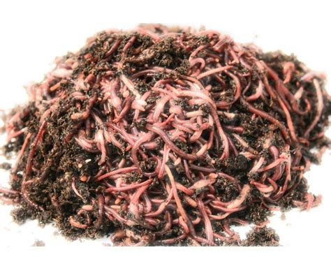 worms wigglers composting wiggler count 1000 alibaba wiggle dirt guide compost