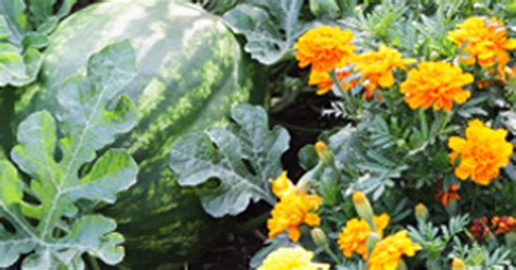 20 plants you should grow side by side