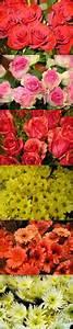 Langage Des Fleurs Pivoine : le langage des fleurs les conseils des fleuristes pour vos bouquets de fleurs ~ Melissatoandfro.com Idées de Décoration