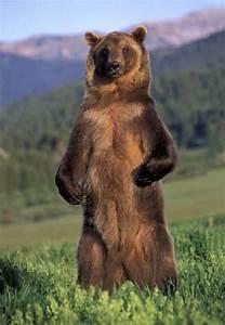 Dear Person Reading This,: Bear Skull Apology