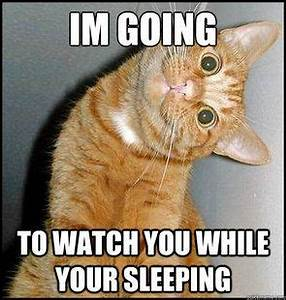 36 Funny Cat Memes That Will Make You Laugh Out Loud ...