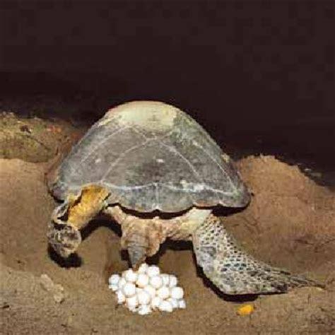 heat ls for water turtles le monde des tortues le partage c est classe maternelle