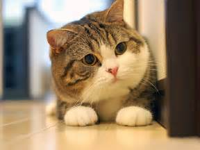 world s cutest cat is this the cutest cat in the world or maybe one of these
