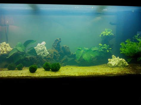 probl 232 me d eau trouble blanche forum aquarium