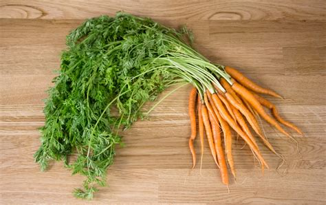 kitchen compost bin kitchen compost what to do with your carrot tops mollie 39 s kitchen