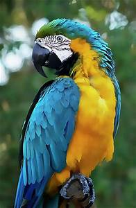 Amazing colours of blue and yellow on this vibrant parrot ...
