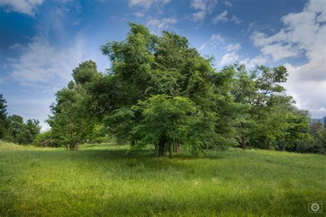 Tree Backgrounds by Green Tree Background High Quality Free Backgrounds