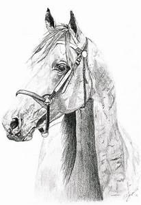 pencil sketch horse | Drawing Inspiration | Pinterest ...
