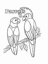 Parrot Coloring Pages Printable Realistic Parrots Animals Pirate Print Getcolorings Birds Mycoloring sketch template