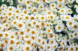 Herbstblumen Garten Winterhart : 20 beliebte garten blumen f r fr hling sommer herbst winter ~ Frokenaadalensverden.com Haus und Dekorationen