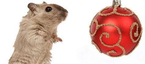 will keeping lights on keep mice away keeping your home rodent free this holiday season abc blog
