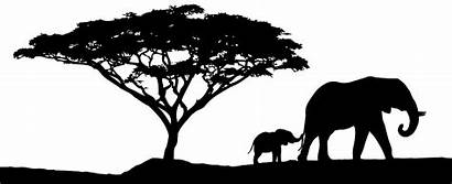Safari African Sunset Silhouette Landscape Tree Africa