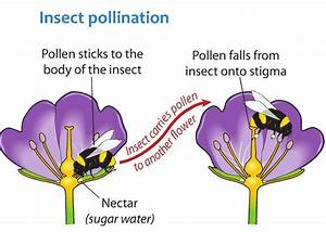 Image Result For Pollination Diagram
