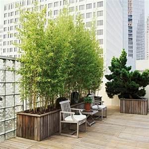 Bambus pflanzen balkon ideen balcony pinterest for Balkon ideen bambus