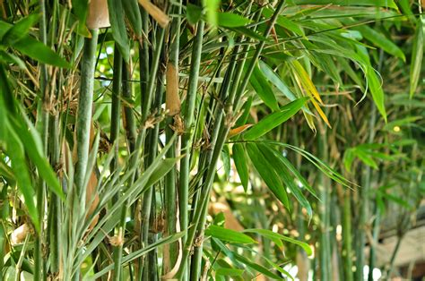 how do you get rid of bamboo 3 ways to kill bamboo wikihow