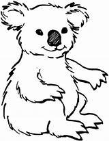 Coloring Animal Koala Koalas Printable Books Pages Bear Sheets Animals Drawing Draw sketch template
